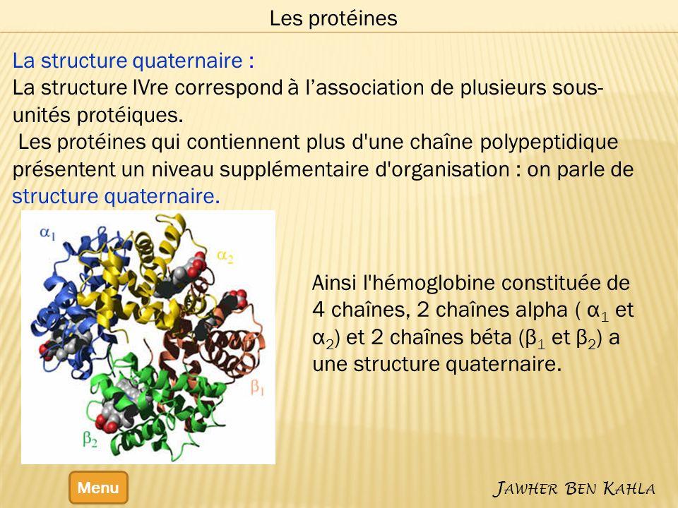 Menu J AWHER B EN K AHLA Les protéines La structure quaternaire : La structure IVre correspond à lassociation de plusieurs sous- unités protéiques.