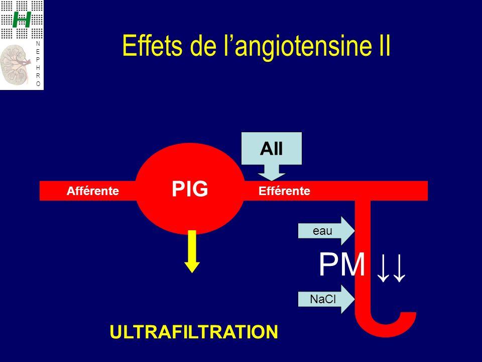 NEPHRONEPHRO Effets de langiotensine II PIG Afférente Efférente AII ULTRAFILTRATION PM eau NaCl