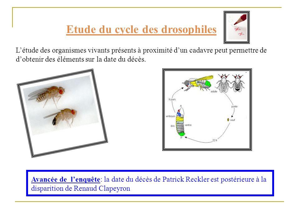 Etude du cycle des drosophiles Létude des organismes vivants présents à proximité dun cadavre peut permettre de dobtenir des éléments sur la date du d