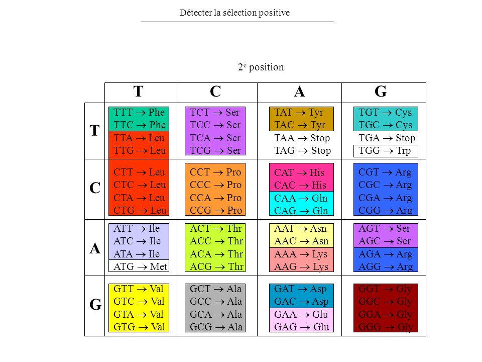 Détecter la sélection positive T C A G TCAG 2 e position TTT Phe TTC Phe TTA Leu TTG Leu CTT Leu CTC Leu CTA Leu CTG Leu ATT Ile ATC Ile ATA Ile ATG M