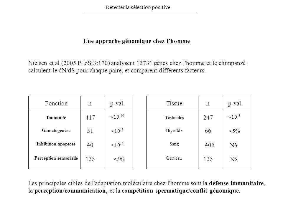 Détecter la sélection positive Nielsen et al (2005 PLoS 3:170) analysent 13731 gènes chez l'homme et le chimpanzé calculent le dN/dS pour chaque paire