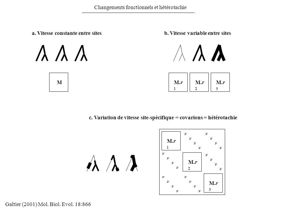 Galtier (2001) Mol. Biol. Evol. 18:866 Changements fonctionnels et hétérotachie a. Vitesse constante entre sites c. Variation de vitesse site-spécifiq