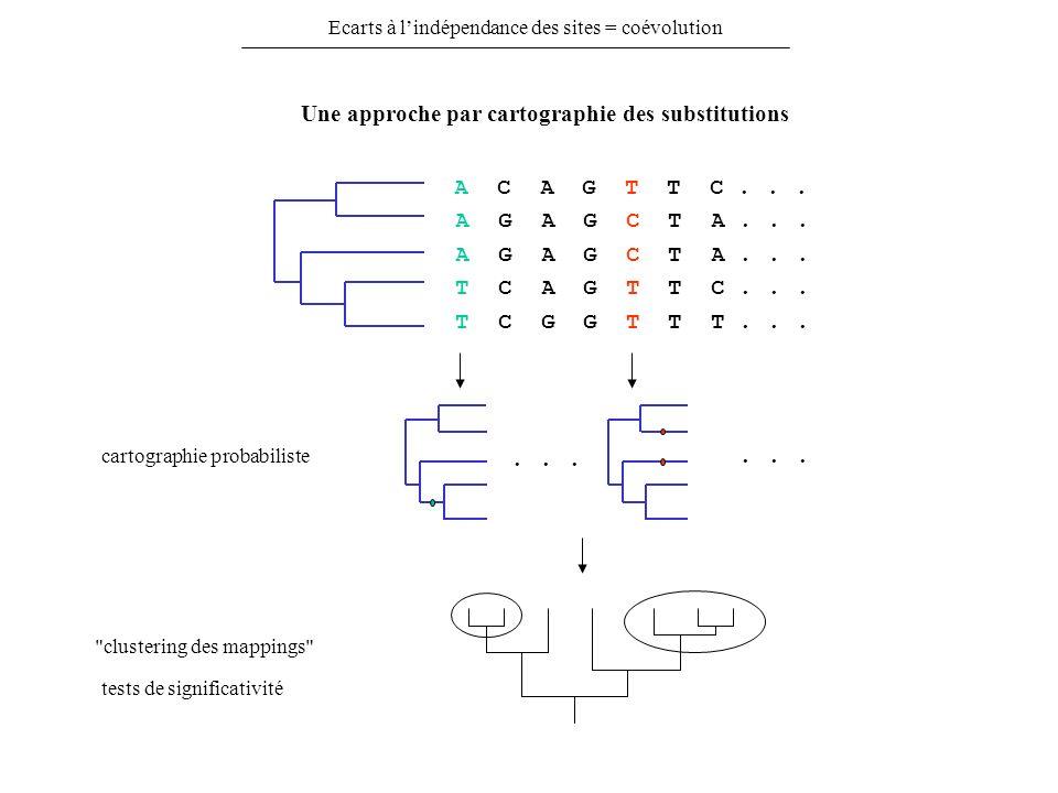 Ecarts à lindépendance des sites = coévolution Une approche par cartographie des substitutions A C A G T T C... A G A G C T A... T C A G T T C... T C