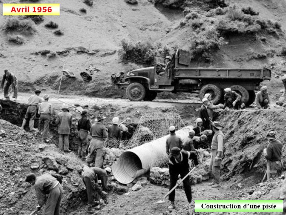 Juillet 1958 Cueillette des dattes à Béni-Abbès (département de la Saoura)