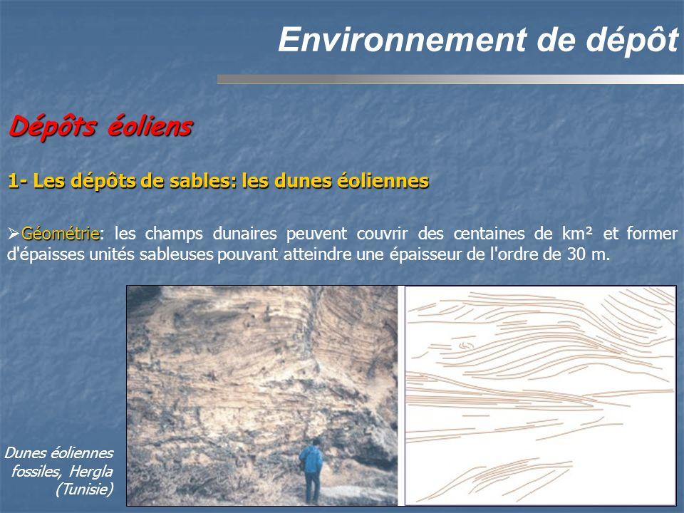 Environnement de dépôt Géométrie Géométrie: les champs dunaires peuvent couvrir des centaines de km² et former d épaisses unités sableuses pouvant atteindre une épaisseur de l ordre de 30 m.