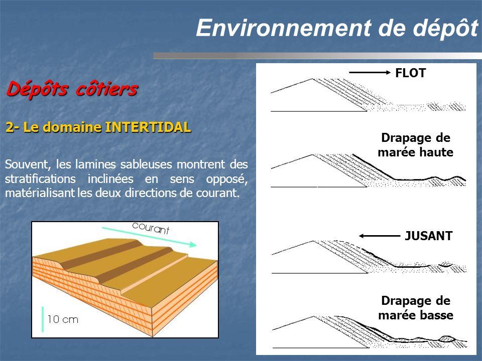 Dépôts côtiers Environnement de dépôt 2- Le domaine INTERTIDAL Souvent, les lamines sableuses montrent des stratifications inclinées en sens opposé, matérialisant les deux directions de courant.FLOT Drapage de marée haute JUSANT Drapage de marée basse