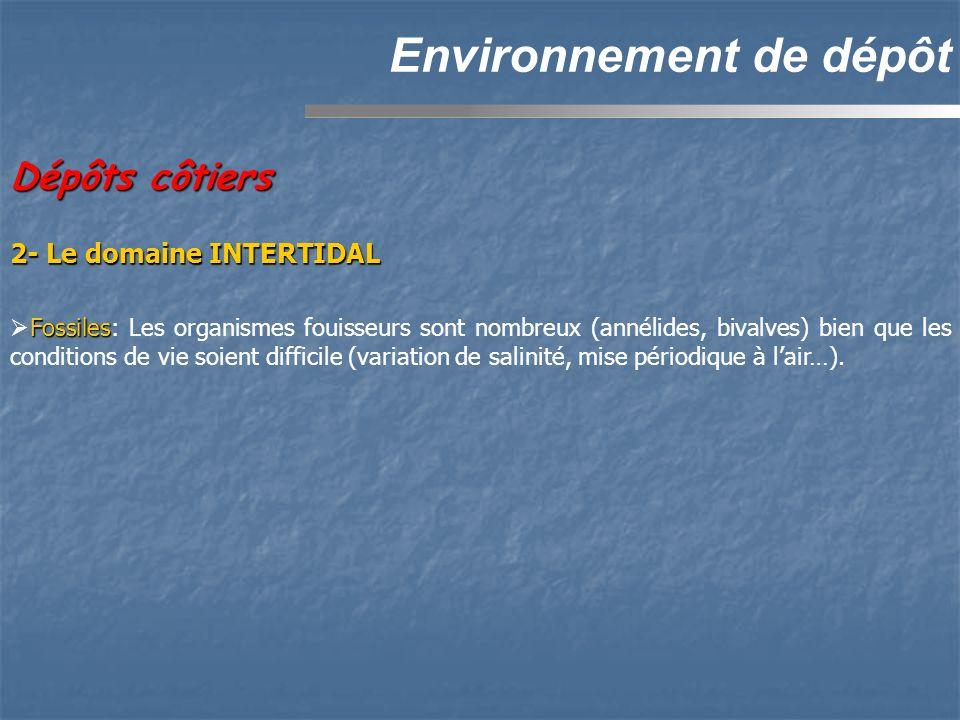 Dépôts côtiers Environnement de dépôt 2- Le domaine INTERTIDAL Fossiles Fossiles: Les organismes fouisseurs sont nombreux (annélides, bivalves) bien q