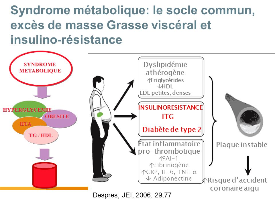 Définition du syndrome métabolique NCEP-ATP III *Diagnosis is established when >3 of these risk factors are present Risk Factor Defining Level Abdominal obesity (Waist circumference) Men>102 cm Women>88 cm TG>150 mg/dL HDL-C Men<40 mg/dL Women<50 mg/dL Blood pressure>130 / >85 mm Hg Fasting glucose>110 (>100**) mg/dL Expert Panel on Detection, Evaluation, and Treatment of High Blood Cholesterol in Adults.