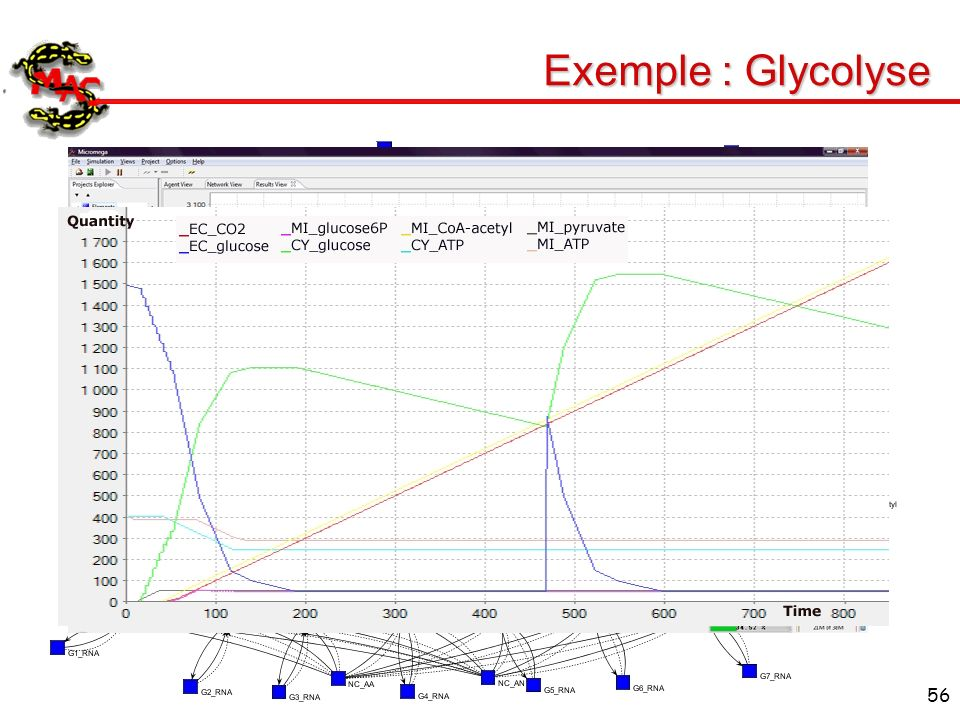 56 Exemple : Glycolyse