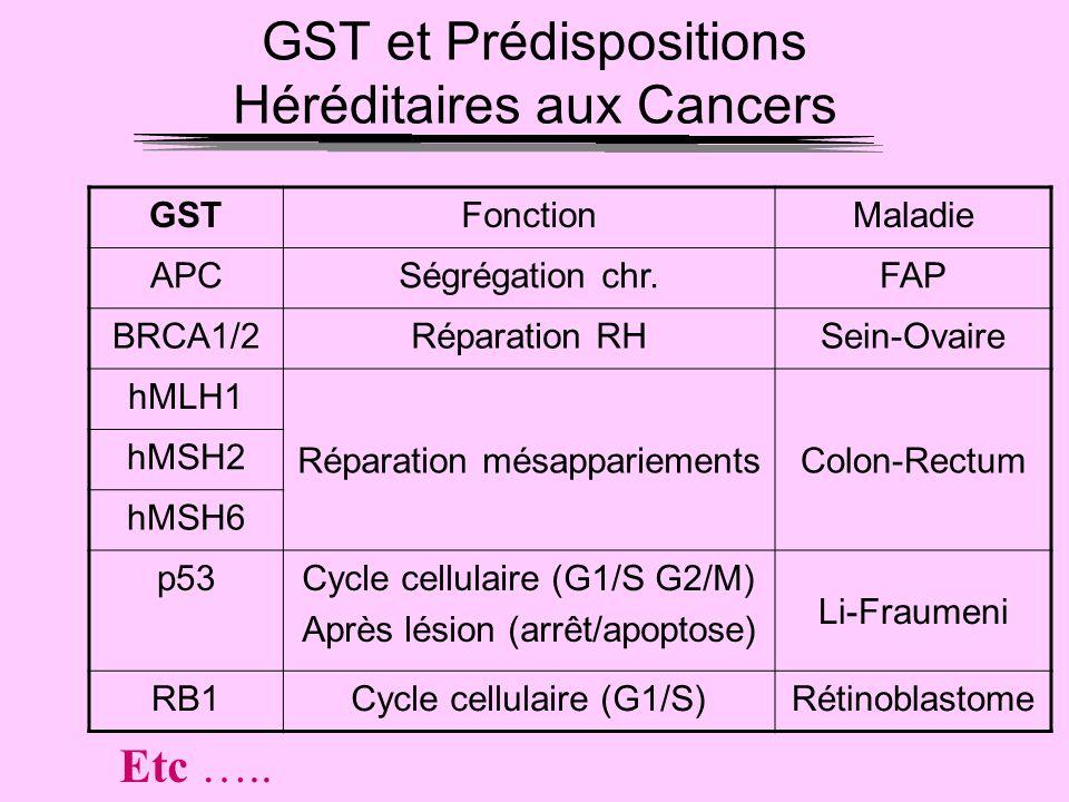 GST et Prédispositions Héréditaires aux Cancers GSTFonctionMaladie APCSégrégation chr.FAP BRCA1/2Réparation RHSein-Ovaire hMLH1 Réparation mésappariem
