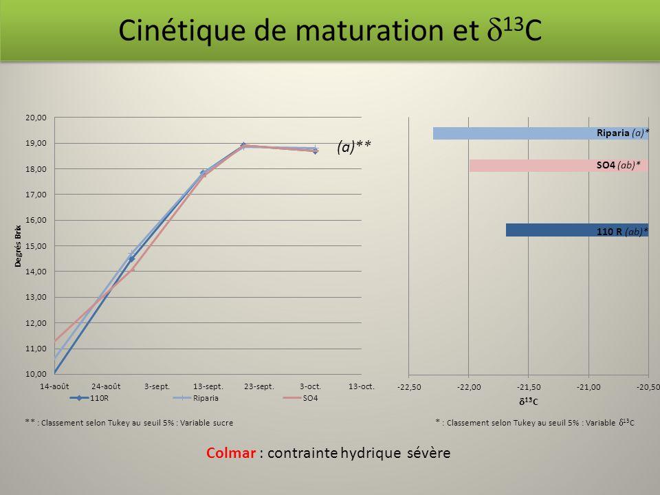 Cinétique de maturation et 13 C Riparia (a)* SO4 (ab)* (a)** Colmar : contrainte hydrique sévère ** : Classement selon Tukey au seuil 5% : Variable su