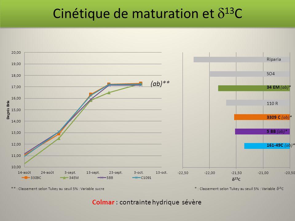 Riparia SO4 (ab)** Cinétique de maturation et 13 C Colmar : contrainte hydrique sévère ** : Classement selon Tukey au seuil 5% : Variable sucre * : Cl