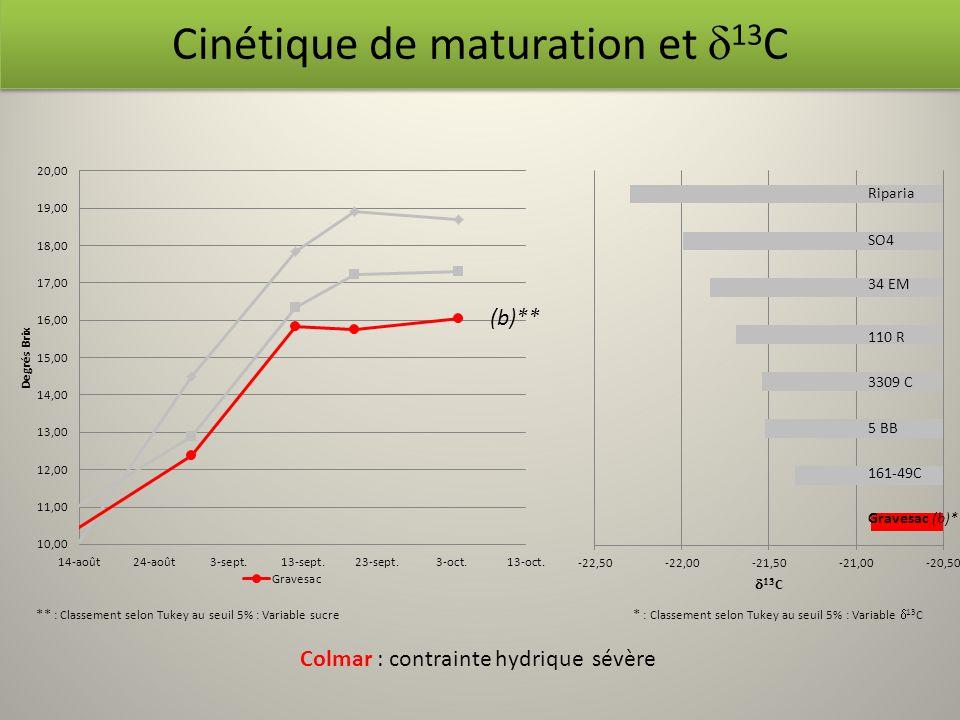 Riparia SO4 (b)** Cinétique de maturation et 13 C Colmar : contrainte hydrique sévère ** : Classement selon Tukey au seuil 5% : Variable sucre * : Cla