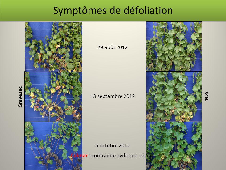Symptômes de défoliation Gravesac SO4 29 août 2012 13 septembre 2012 5 octobre 2012 Colmar : contrainte hydrique sévère