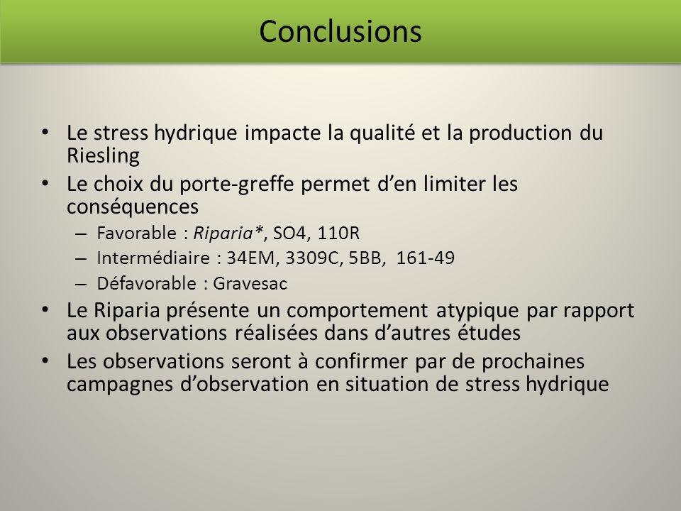 Le stress hydrique impacte la qualité et la production du Riesling Le choix du porte-greffe permet den limiter les conséquences – Favorable : Riparia*