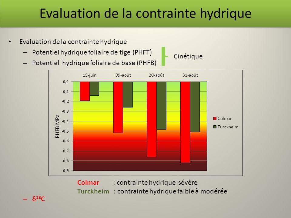 Evaluation de la contrainte hydrique – Potentiel hydrique foliaire de tige (PHFT) – Potentiel hydrique foliaire de base (PHFB) – 13 C Evaluation de la