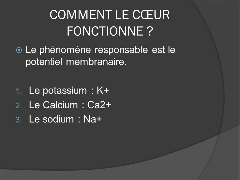 COMMENT LE CŒUR FONCTIONNE ? Le phénomène responsable est le potentiel membranaire. 1. Le potassium : K+ 2. Le Calcium : Ca2+ 3. Le sodium : Na+