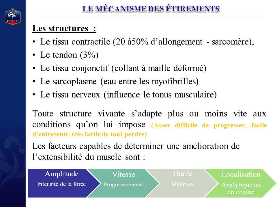Les structures : Le tissu contractile (20 à50% dallongement - sarcomère), Le tendon (3%) Le tissu conjonctif (collant à maille déformé) Le sarcoplasme