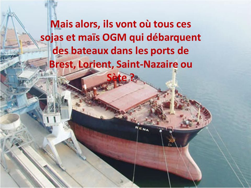 Les 4,5 millions de tonnes d OGM importés en France partent dans lalimentation des porcs, volailles, vaches, …