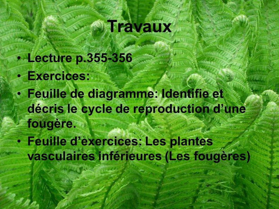 Travaux Lecture p.355-356 Exercices: Feuille de diagramme: Identifie et décris le cycle de reproduction dune fougère.