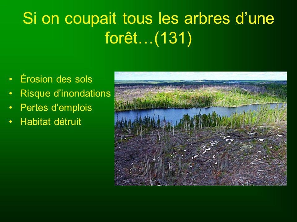 Types de forêts (132) Forêt tropicale humide: –Pluies abondantes et régulières