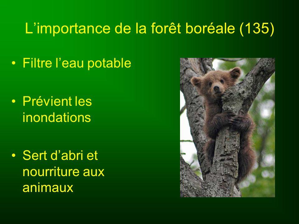 Limportance de la forêt boréale (135) Industries des pâtes et papiers Plus de 400 000 emplois Canada est le principal exportateur de papier journal Nombreux touristes