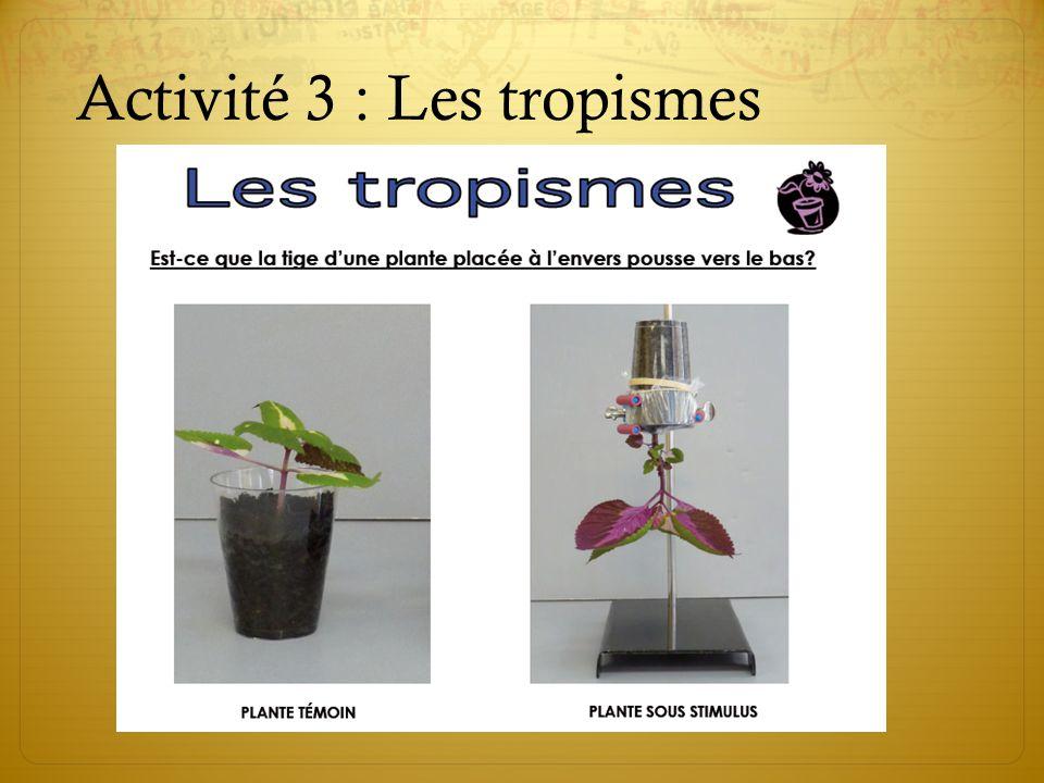 Activité 3 : Les tropismes