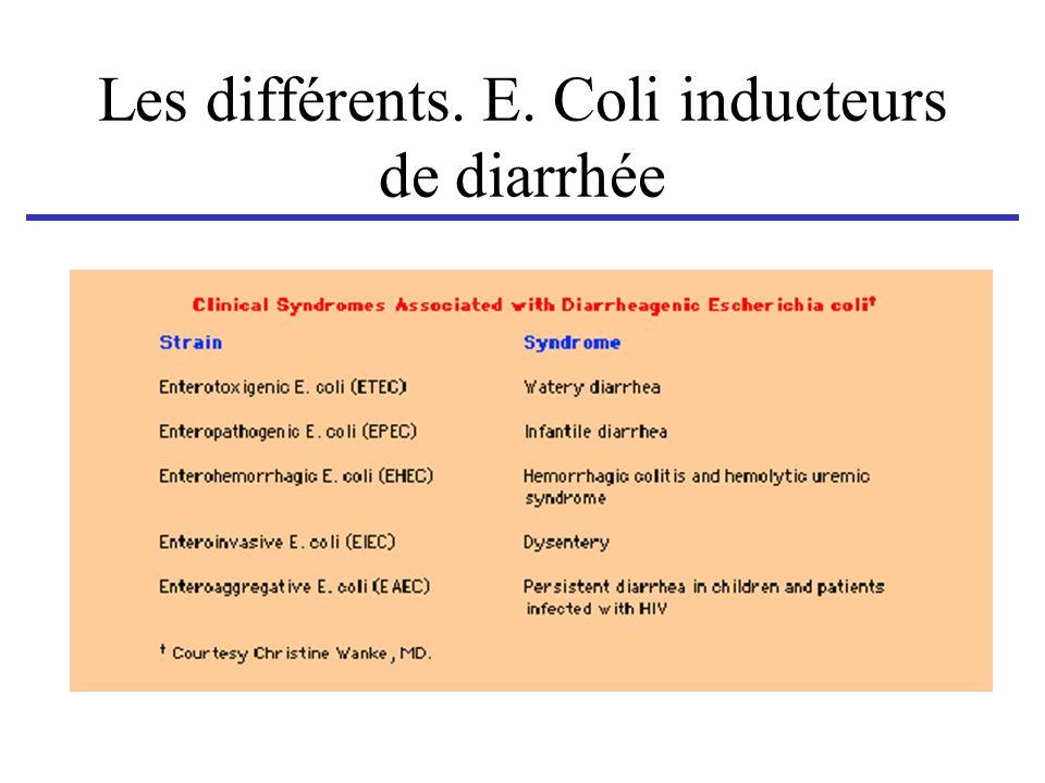 Les différents. E. Coli inducteurs de diarrhée