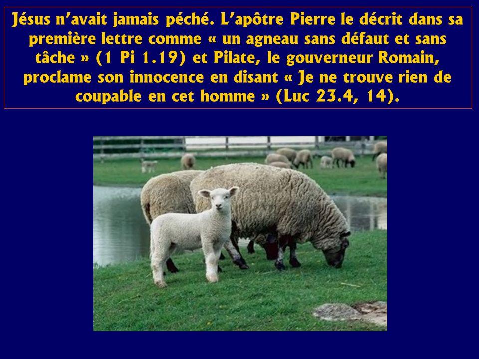Jésus navait jamais péché. Lapôtre Pierre le décrit dans sa première lettre comme « un agneau sans défaut et sans tâche » (1 Pi 1.19) et Pilate, le go