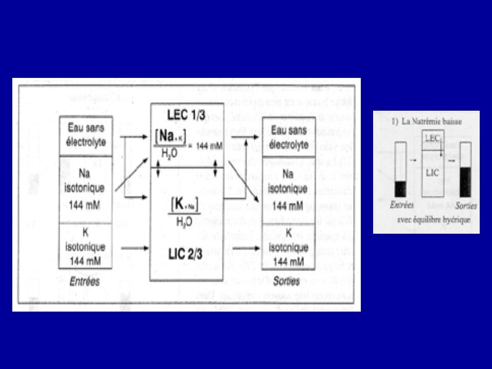 Equilibre de la tonicité Dans nos apports quotidiens de Na+K+H 2 O: - une partie dH 2 0 correspond à Na+K pour que cet apport soit isotonique, lautre partie est indépendante de Na+K, cest leau sans électrolytes ( leau libre) - Clearance de leau libre et osmolaire compare losmolalité plasmatique et urinaire.