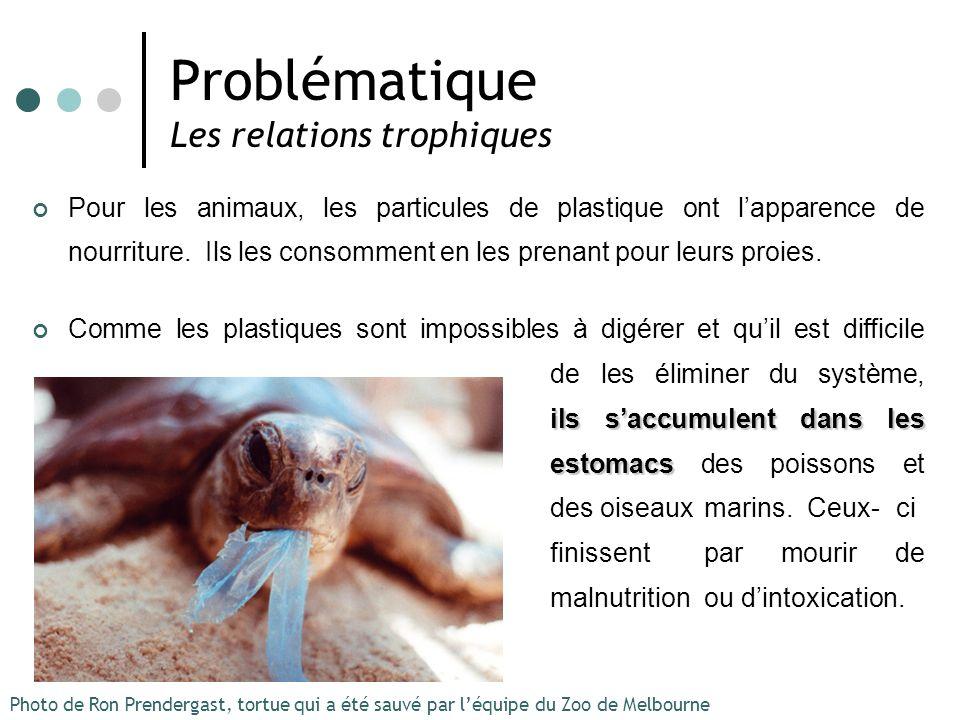 Problématique Les relations trophiques Pour les animaux, les particules de plastique ont lapparence de nourriture. Ils les consomment en les prenant p