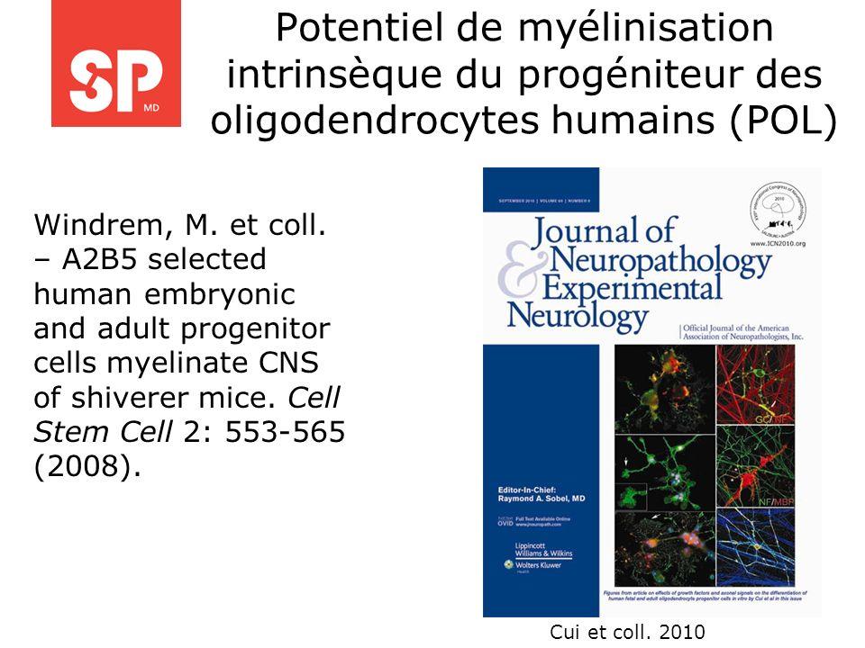 Potentiel de myélinisation intrinsèque du progéniteur des oligodendrocytes humains (POL) Windrem, M. et coll. – A2B5 selected human embryonic and adul