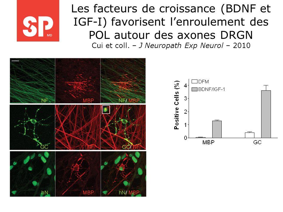 Les facteurs de croissance (BDNF et IGF-I) favorisent lenroulement des POL autour des axones DRGN Cui et coll. – J Neuropath Exp Neurol – 2010