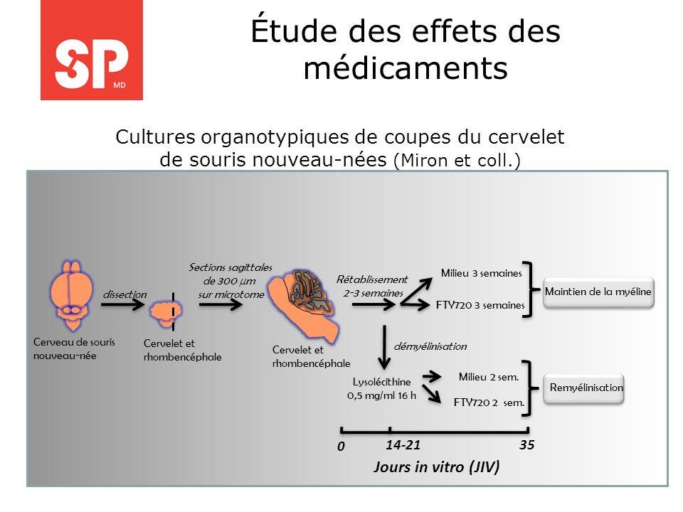 . Cultures organotypiques de coupes du cervelet de souris nouveau-nées (Miron et coll.) Cerveau de souris nouveau-née Cervelet et rhombencéphale disse