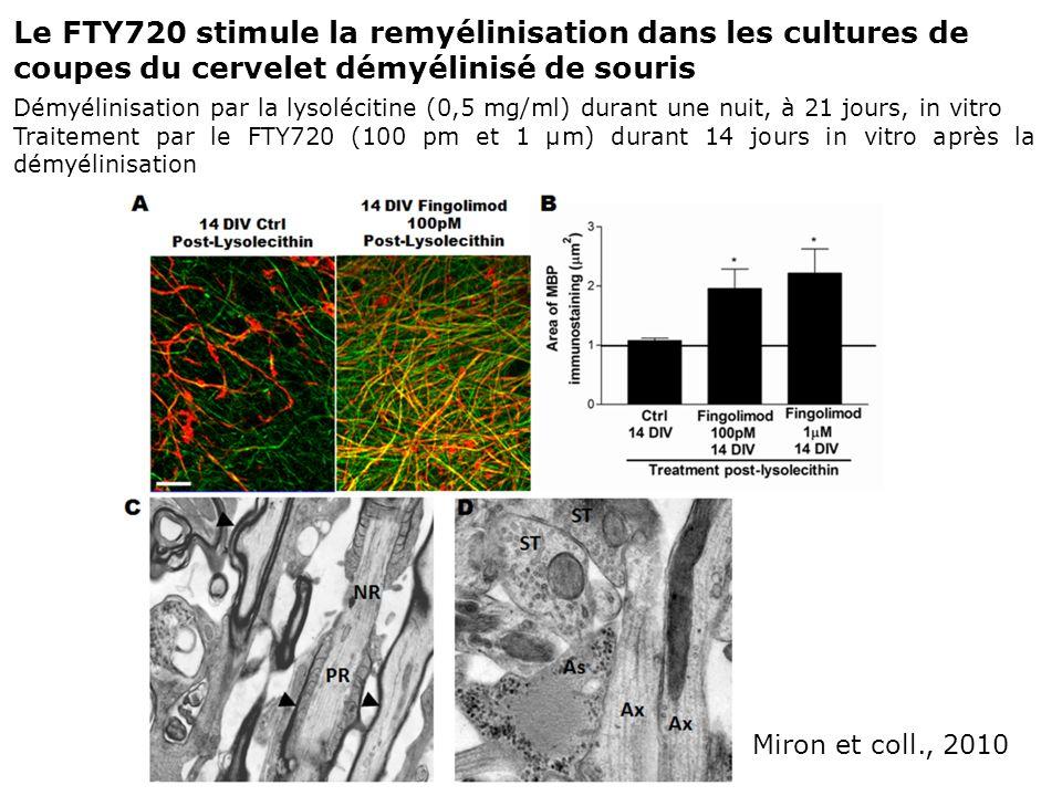 Miron et coll., 2010 Le FTY720 stimule la remyélinisation dans les cultures de coupes du cervelet démyélinisé de souris Démyélinisation par la lysoléc
