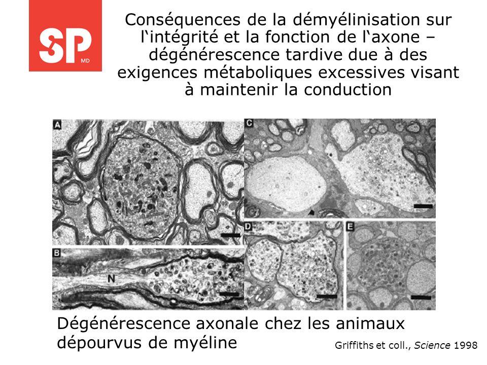 Griffiths et coll., Science 1998 Conséquences de la démyélinisation sur lintégrité et la fonction de laxone – dégénérescence tardive due à des exigenc