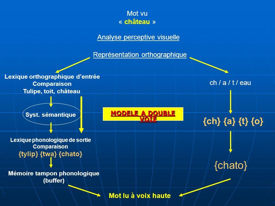 MODELE A DOUBLE VOIE Mot vu « château » Analyse perceptive visuelle Représentation orthographique Lexique orthographique dentrée Comparaison Tulipe, t
