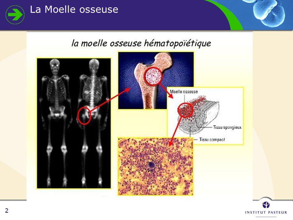 3 Hématopoïèse Moelle osseuse Sang périphérique cellules souches non quantifiables Blastes < 5% Lignée érythroblastique ~30% Lignée granuleuse ~60% Proportion pyramidale inversée