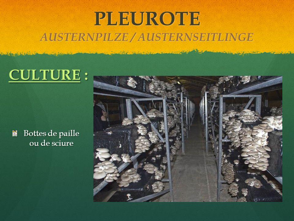 Bottes de paille ou de sciure CULTURE : PLEUROTE AUSTERNPILZE / AUSTERNSEITLINGE