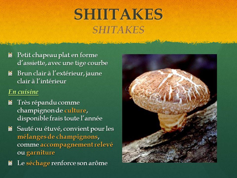 SHIITAKES SHITAKES Petit chapeau plat en forme dassiette, avec une tige courbe Brun clair à lextérieur, jaune clair à lintérieur En cuisine Très répan