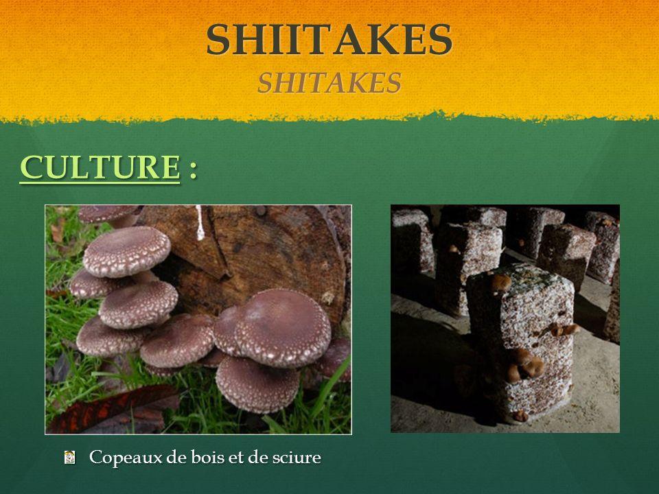 Copeaux de bois et de sciure CULTURE : SHIITAKES SHITAKES