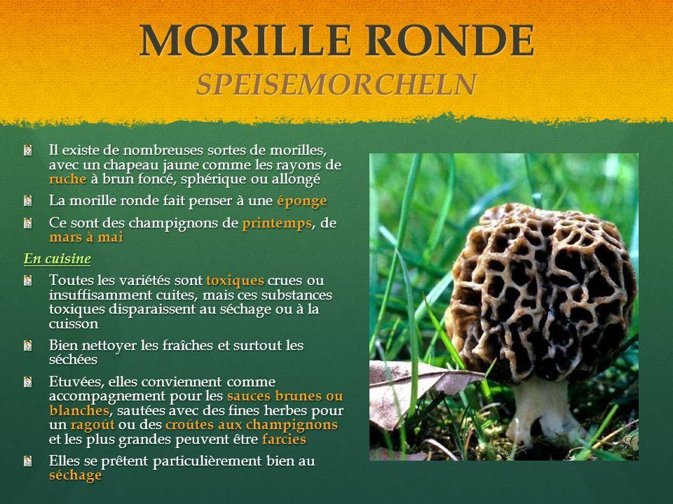 MORILLE RONDE SPEISEMORCHELN Il existe de nombreuses sortes de morilles, avec un chapeau jaune comme les rayons de ruche à brun foncé, sphérique ou al