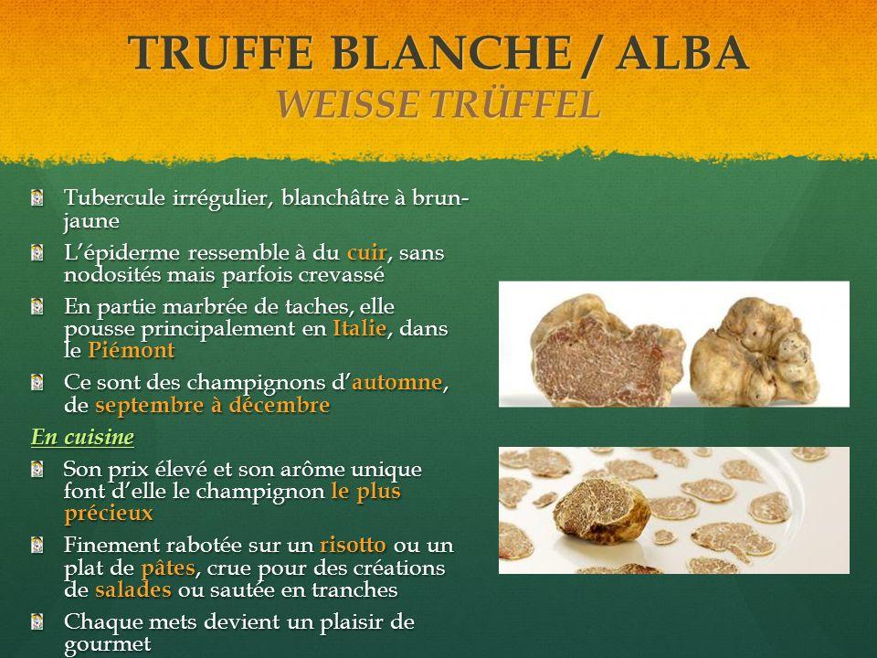 TRUFFE BLANCHE / ALBA WEISSE TRÜFFEL Tubercule irrégulier, blanchâtre à brun- jaune Lépiderme ressemble à du cuir, sans nodosités mais parfois crevass