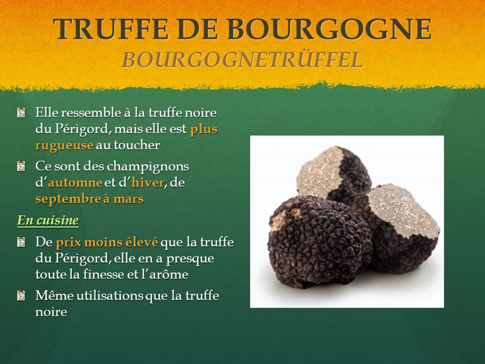 TRUFFE DE BOURGOGNE BOURGOGNETRÜFFEL Elle ressemble à la truffe noire du Périgord, mais elle est plus rugueuse au toucher Ce sont des champignons d au