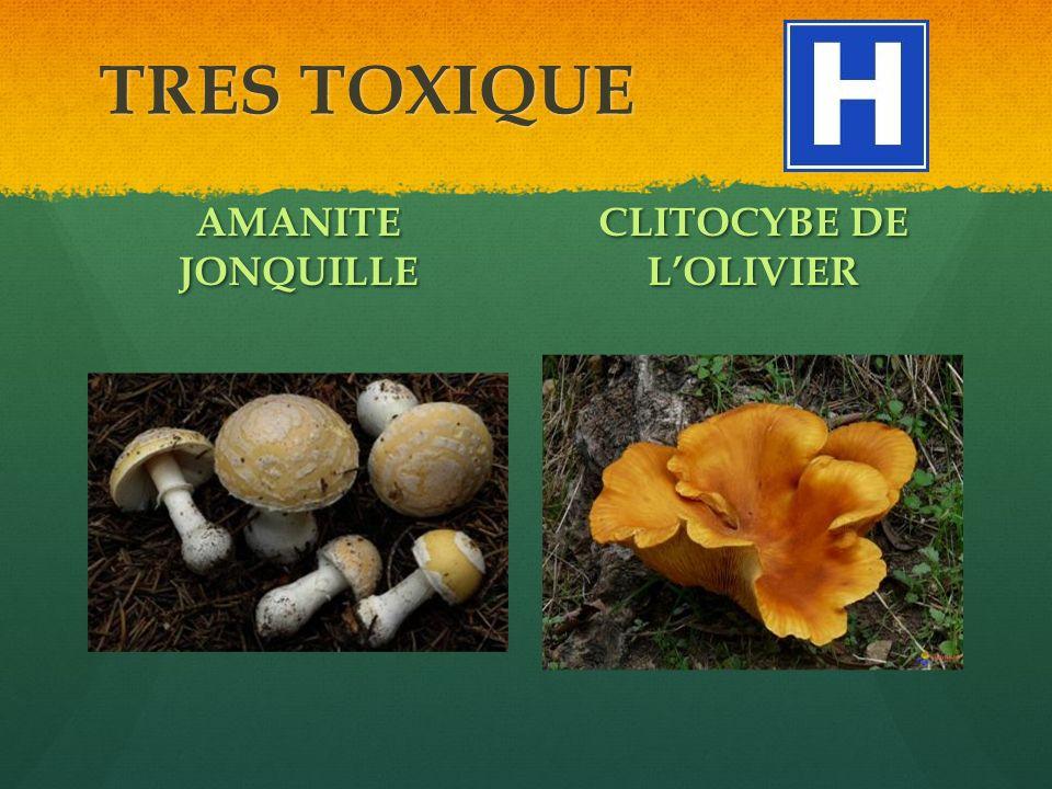 TRES TOXIQUE AMANITE JONQUILLE CLITOCYBE DE LOLIVIER