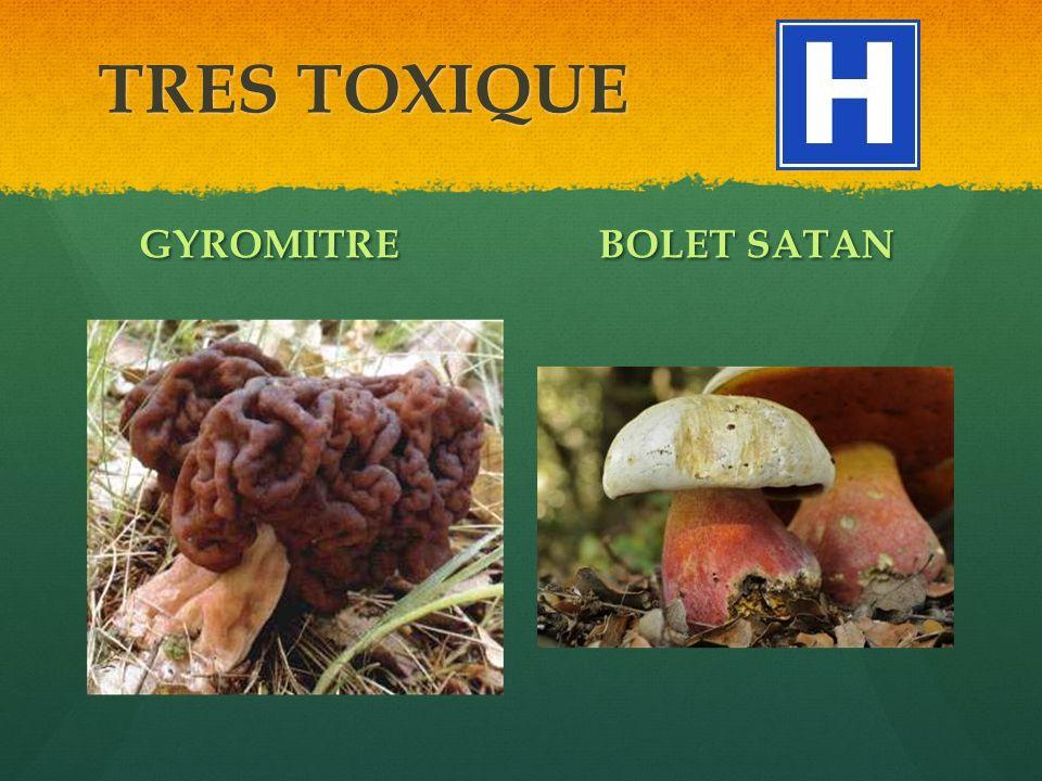 TRES TOXIQUE GYROMITREBOLET SATAN