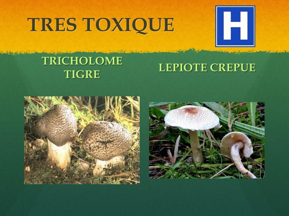 TRES TOXIQUE TRICHOLOME TIGRE LEPIOTE CREPUE