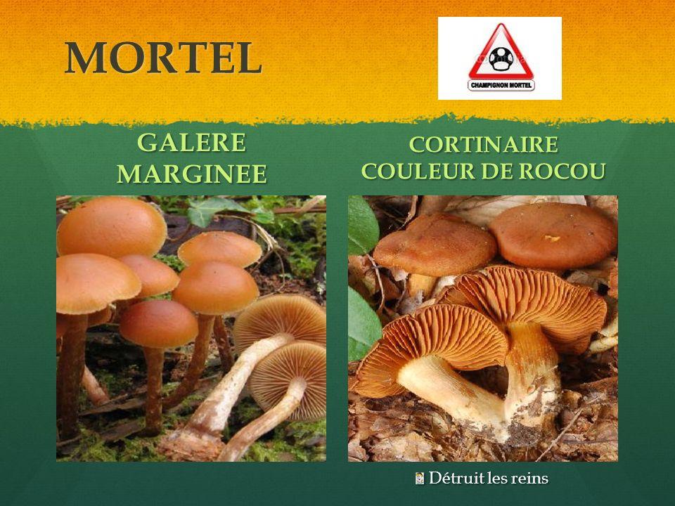 MORTEL GALERE MARGINEE CORTINAIRE COULEUR DE ROCOU Détruit les reins Détruit les reins