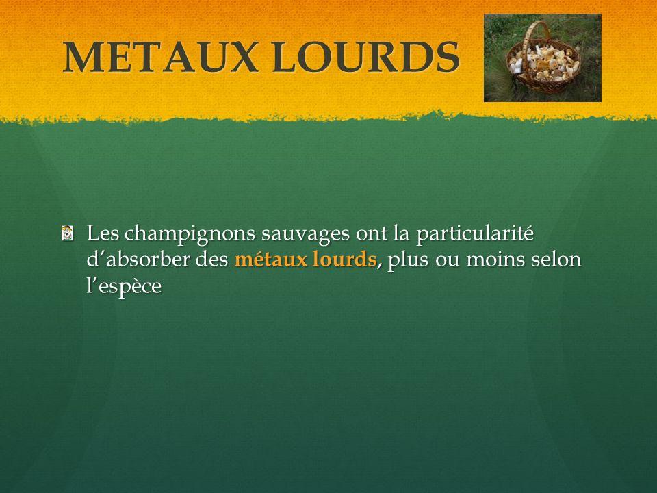 METAUX LOURDS Les champignons sauvages ont la particularité dabsorber des métaux lourds, plus ou moins selon lespèce