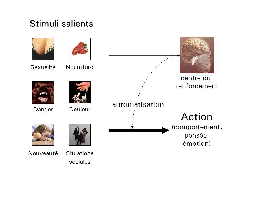Stimuli salients Sexualité Nourriture DangerDouleur NouveautéSituations sociales Action (comportement, pensée, émotion) centre du renforcement automat